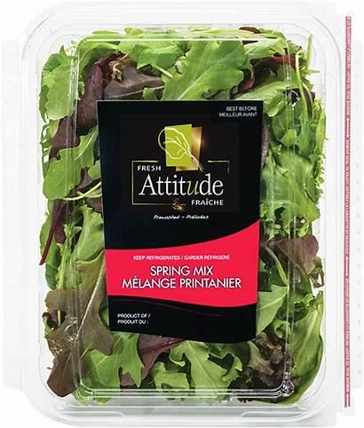 Mix Spring Fresh Attitude Salad Romaine Blends