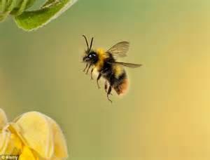 It's Not Hard To Bee An Art Critic How A Honeybee Can
