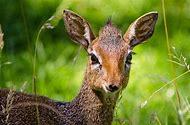Nature Wildlife Animals