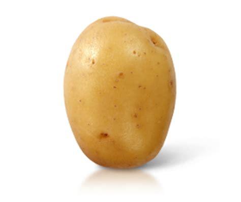 vari 233 t 233 s de pommes de terre de consommation courante gt c n