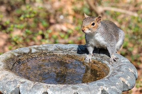17 best images about squirrels photos on pinterest baby