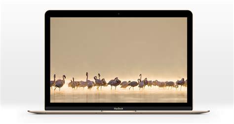 The New Macbook Psd Mockup