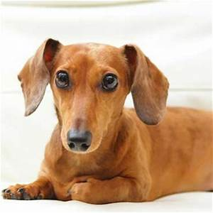 Hundehaare Vom Sofa Entfernen : wie viel schlaf ben tigt ein hund tierisch wohnen ~ Bigdaddyawards.com Haus und Dekorationen