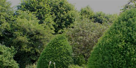 Pflanzen Fr Den Garten. Interesting Agapanthus Umbellatus