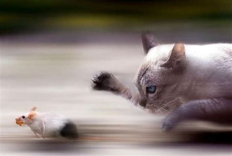 Funny Cool Pictures: Perfectly Timed Animal Pictures