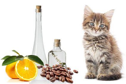 Essig Gegen Geruch by Katzenurin Geruch Entfernen Tipps Hier Profichemie