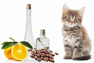 Essig Geruch Neutralisieren : katzenurin geruch entfernen tipps hier ~ Bigdaddyawards.com Haus und Dekorationen