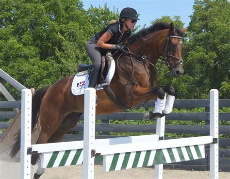 courtney lau horse flying farm cross horses