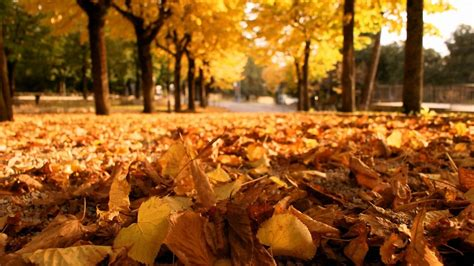 Falling Leaves Wallpaper Animated - fallen leaves hd wallpaper 1366x768 29985