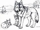 Wolf Coloring Animal Burgess Children Pages Coyote sketch template