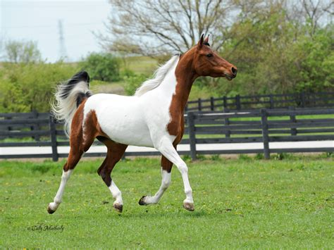 100 107 best beautiful horse barns trausti u0027s