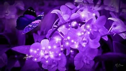 Purple Theme Wallpapers Bright Flower Flowers Butterflies