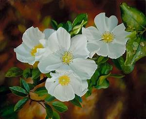 Georgia's State Flower: The Cherokee Rose | Georgia Pride ...