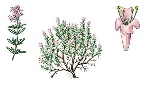 feuille cuisine encyclopédie larousse en ligne aromate aromata