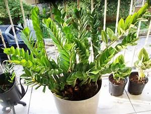 Ten, Unusual, Indoor, Plants, For, Your, Office, Desk
