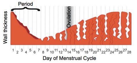 Uterine Wall Shedding During Menstruation by Endometriosis Awareness Week Histology
