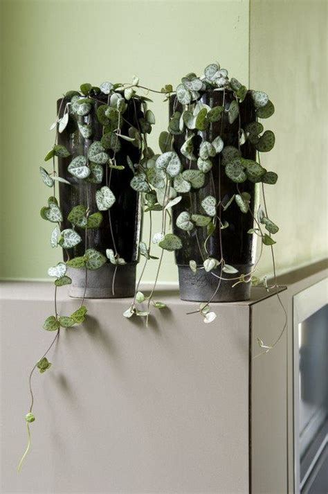 5 plantes pour votre salle de bain roselia gardenroselia garden