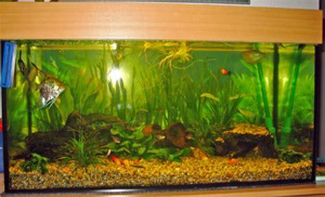 aquarium 112 l mit fischen zu verschenken aquarien