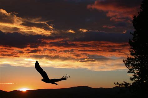 Eagle In Flight Wallpaper Eagle At Sunset Photograph By Shane Bechler