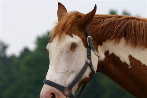blind horse facts never file horses knew nature commons wikimedia 2048