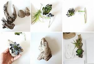 Deco En Bois Flotté A Faire Soi Meme : d co bois flott plantes succulentes la nature s ~ Preciouscoupons.com Idées de Décoration