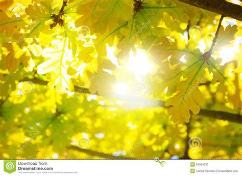 Leaves Backlight Stock Photo Image 54594230