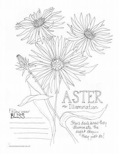 Coloring Aster Pages