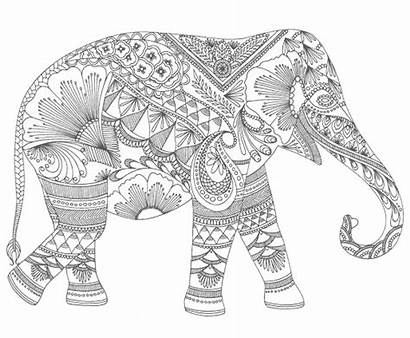 Adult Colouring Giphy Pakistani Perfect Artistic Present