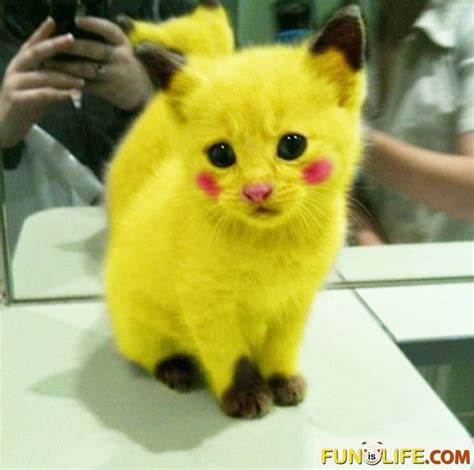 Real Life Pikachu Funny Pictures Pinterest Real Life