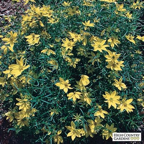 drought tolerant plants clay soil 53 best clay tolerant plants images on pinterest perennial plant drought tolerant plants and