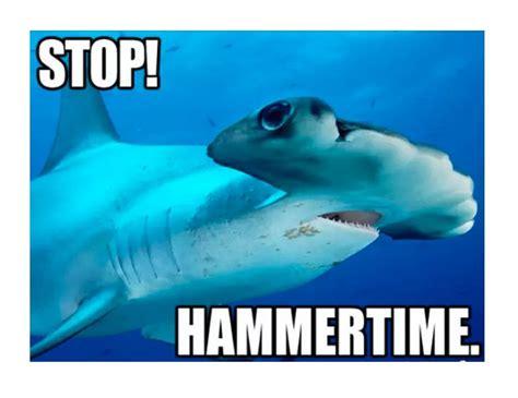 Shark Meme - image gallery shark meme