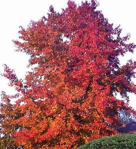 Arbre à Croissance Rapide Pour Ombre : les plus beaux feuillages d 39 automne inspirations desjardins ~ Premium-room.com Idées de Décoration