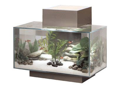 fluval edge aquarium  bring  great zen feeling