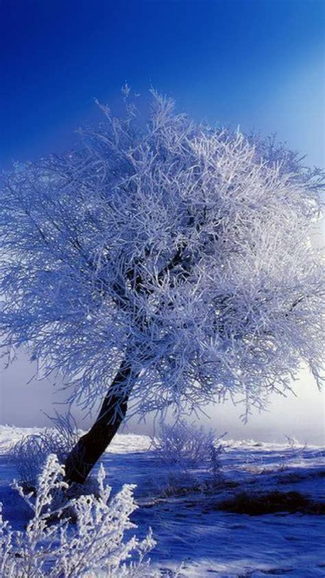 【2020年の最高】 雪景 色 壁紙 ~ 無料の印刷可能なイラスト画像