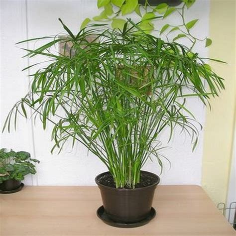 plante retombante ombre dootdadoo id 233 es de conception sont int 233 ressants 224 votre d 233 cor