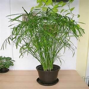 Plantes D Ombre Extérieur : plante interieur et exterieur pivoine etc ~ Melissatoandfro.com Idées de Décoration