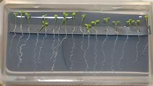 Was Brauchen Pflanzen Zum Wachsen : wie wachsen pflanzen im weltall keimen samen auf dem mars garten pflanzen news green24 ~ Frokenaadalensverden.com Haus und Dekorationen