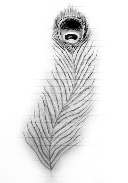 draw  peacock feather  feather drawing