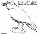 Raven Coloring Pages Ravens Queen Crow Results sketch template