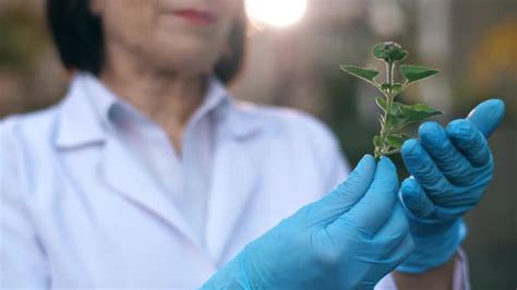 Biologist Researching a Plant by Ilya2k | VideoHive
