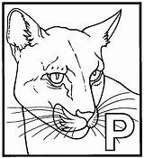 Panther Coloring Pages Printable Animal Head Drawing Template Sheet Marvel Animals Para Adults Sketch Pantera Colorir Desenhos Getdrawings 711px 38kb sketch template