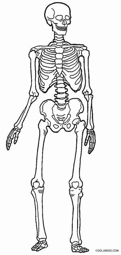 Skeleton Coloring Human Drawing Printable Anatomy Anatomical