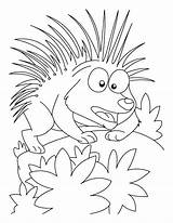 Porcupine Coloring Pages Cartoon Printable Attacking Mood Getcolorings Getcoloringpages Animal sketch template
