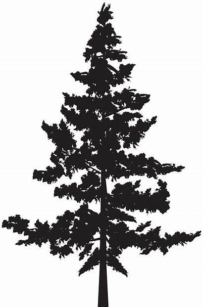 Silhouette Clipart Tree Cedar Trees Pine Clip