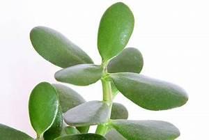 Plante Verte D Appartement : plantes d appartement du jardinage ~ Premium-room.com Idées de Décoration