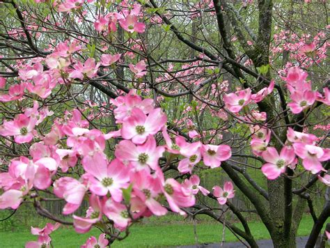 types of pink flowering trees 5 types of trees with red leaves year round my ideas bedroom