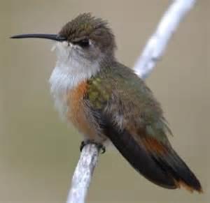 49 Best Fix Wild Bird Feeding Problems Images On Pinterest