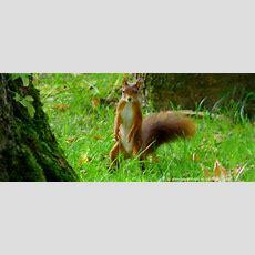 Tierwelt Bayern Tiere Bilder Lustige Tierbilder Witzige