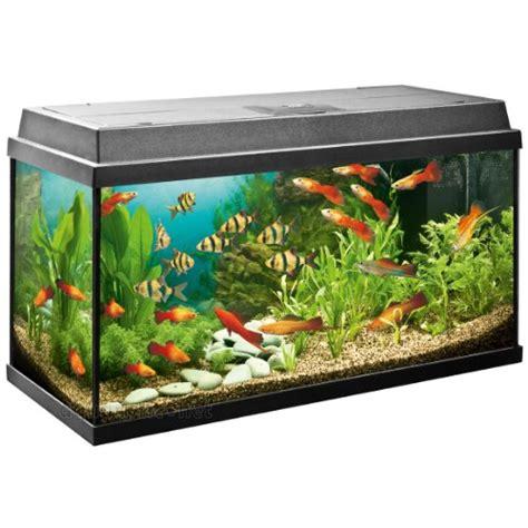 prix des aquarium