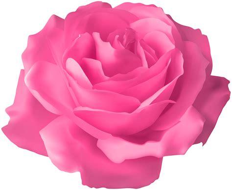 Pink Rose Transparent PNG Clip Art Image Gallery